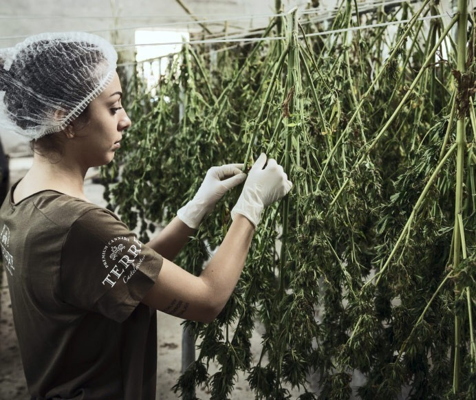 cannabis consulting for operators